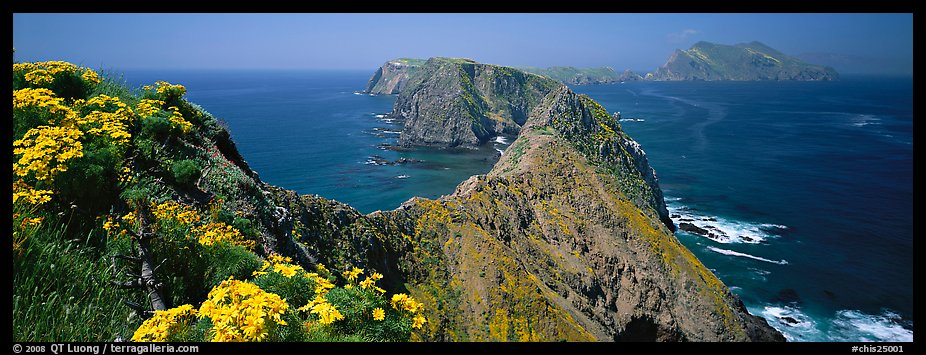 Coreopsis and chain of craggy islands, Anacapa Island. Channel Islands National Park (color)