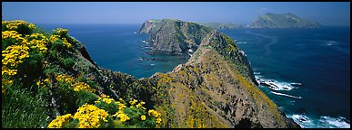 Coreopsis and chain of craggy islands, Anacapa Island. Channel Islands National Park (Panoramic color)
