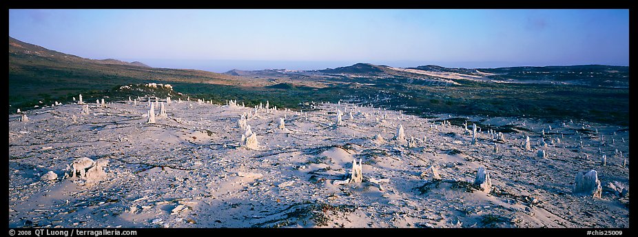 Bizarre ghost forest, San Miguel Island. Channel Islands National Park (color)