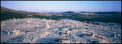 Bizarre ghost forest, San Miguel Island. Channel Islands National Park (Panoramic color)