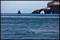 Dolphins and Arch Rock. Channel Islands National Park, California, USA. (color)