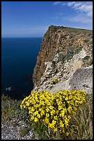 Coreopsis and cliff, Cavern Point, Santa Cruz Island. Channel Islands National Park, California, USA. (color)