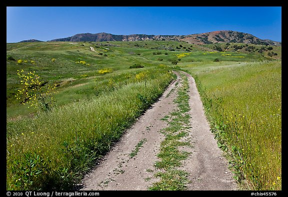 Smugglers Road through green hills in the spring, Santa Cruz Island. Channel Islands National Park (color)