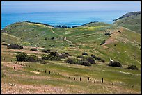 Grasslands in the spring, fence and ocean, Santa Cruz Island. Channel Islands National Park, California, USA. (color)