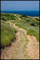 Winding dirt road and ocean, Santa Cruz Island. Channel Islands National Park, California, USA.