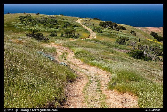Dirt road through coastal hills, Santa Cruz Island. Channel Islands National Park (color)