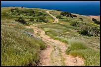 Dirt road through coastal hills, Santa Cruz Island. Channel Islands National Park, California, USA.