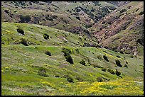 Scorpion Canyon in the spring, Santa Cruz Island. Channel Islands National Park ( color)