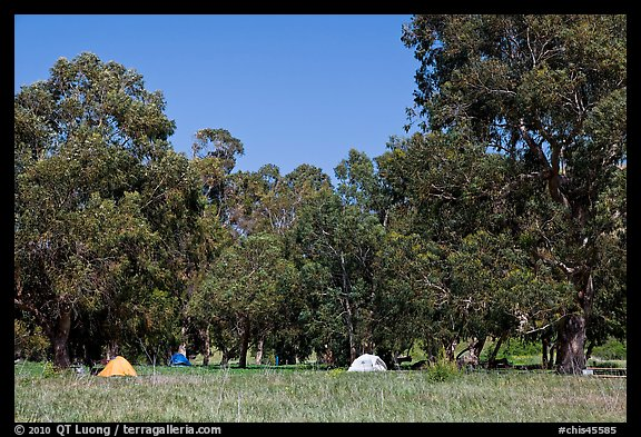 Campground in Scorpion Canyon, Santa Cruz Island. Channel Islands National Park (color)