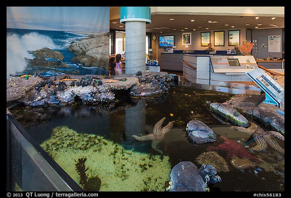 Artificial tidepool inside visitor center. Channel Islands National Park (color)