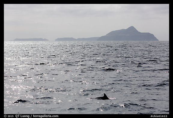 Dolphin fin and Anacapa Islands in background. Channel Islands National Park (color)