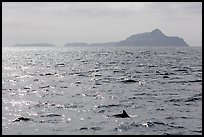 Dolphin fin and Anacapa Islands in background. Channel Islands National Park ( color)