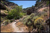Cherry Canyon Trail, Santa Rosa Island. Channel Islands National Park ( color)