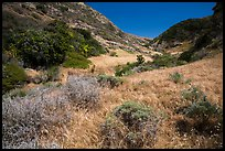 Cherry Canyon, Santa Rosa Island. Channel Islands National Park ( color)