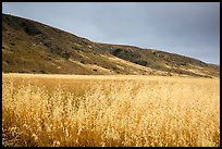 Grasses and hills, Santa Rosa Island. Channel Islands National Park ( color)