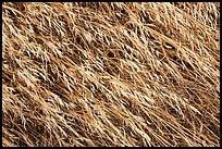 Close-up of tall grasses, Santa Rosa Island. Channel Islands National Park ( color)