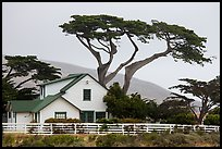 Historic Vail and Vickers main ranch house with cypress trees, Santa Rosa Island. Channel Islands National Park ( color)