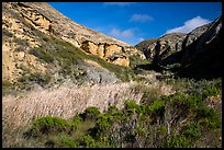 Riparian vegetation and cliffs, Lobo Canyon, Santa Rosa Island. Channel Islands National Park ( color)