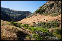 Hikers, Lobo Canyon, Santa Rosa Island. Channel Islands National Park ( color)