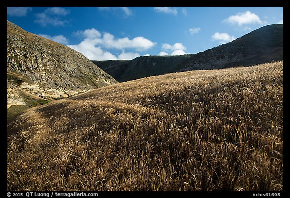 Grassy hillside, Lobo Canyon, Santa Rosa Island. Channel Islands National Park (color)