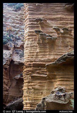 Water-sculptured sandstone wall, Lobo Canyon, Santa Rosa Island. Channel Islands National Park (color)