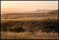 Grasses, Skunk Point, and Santa Cruz Island, sunrise, Santa Rosa Island. Channel Islands National Park ( color)