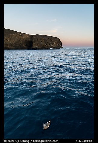 Seabird and Arch Point at dawn, Santa Barbara Island. Channel Islands National Park, California, USA.
