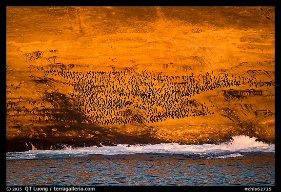 Cormorant colony at sunrise, Santa Barbara Island. Channel Islands National Park (color)