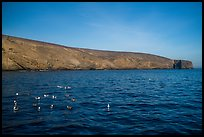 Seabirds and Arch Point, Santa Barbara Island. Channel Islands National Park, California, USA.