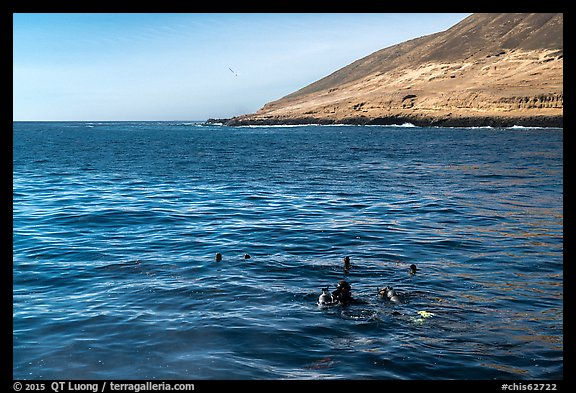 Scuba divers and sea lions on the surface, Santa Barbara Island. Channel Islands National Park (color)