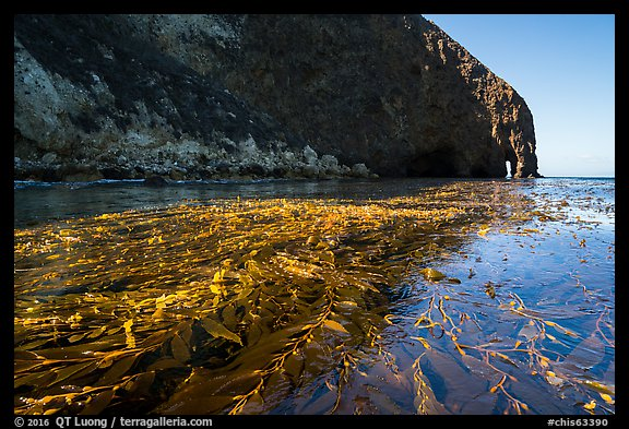 Kelp bed on ocean surface and sea cliff, Santa Cruz Island. Channel Islands National Park (color)