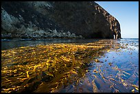 Kelp bed on ocean surface and sea cliff, Santa Cruz Island. Channel Islands National Park ( color)
