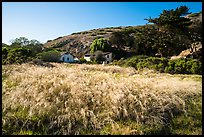 Grasses and former ranch, Scorpion Canyon, Santa Cruz Island. Channel Islands National Park ( color)