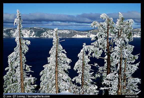 Trees with hoar frost above  Lake. Crater Lake National Park (color)