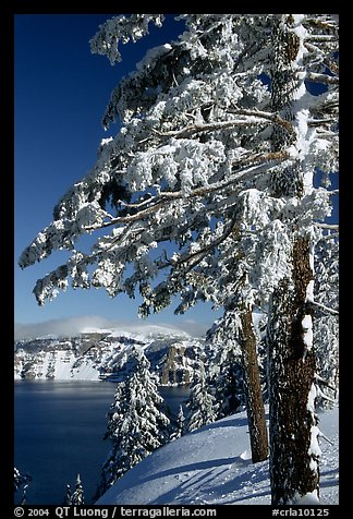 Trees framing  lake in winter. Crater Lake National Park (color)