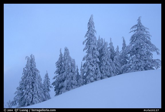 Snow-covered pine trees on a hill. Crater Lake National Park (color)