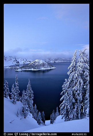 Wizard Island and Lake at dusk, framed by snow-covered trees. Crater Lake National Park (color)