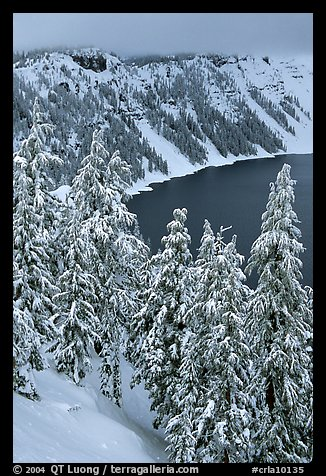 Trees and Lake rim in winter. Crater Lake National Park (color)