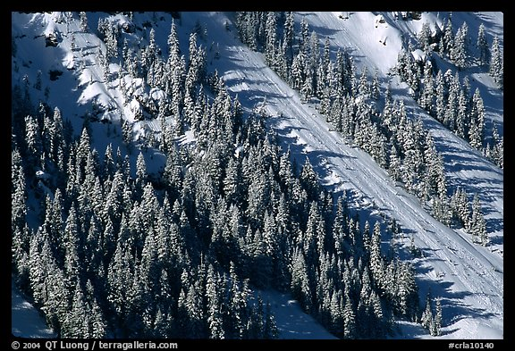 Slope covered with trees in winter. Crater Lake National Park (color)