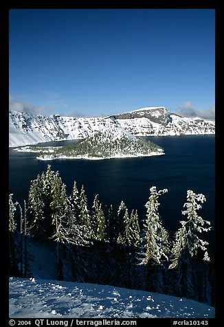 Trees, Wizard Island, and Lake in winter, afternoon. Crater Lake National Park (color)