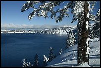 Pine tree with fresh snow on  lake rim. Crater Lake National Park, Oregon, USA. (color)