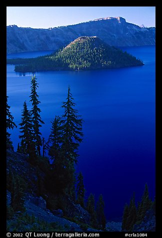 Conifer trees, Lake and Wizard Island. Crater Lake National Park (color)