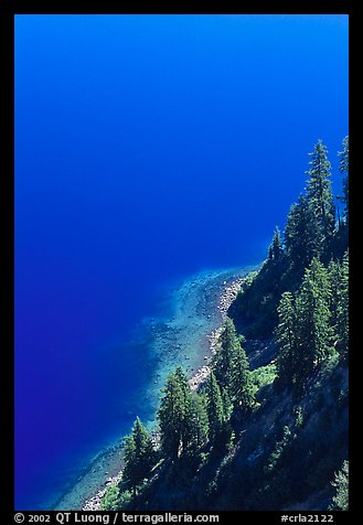 Pine trees and blue waters. Crater Lake National Park (color)