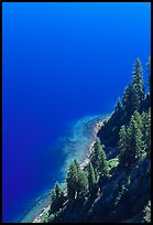 Pine trees and blue waters. Crater Lake National Park, Oregon, USA.