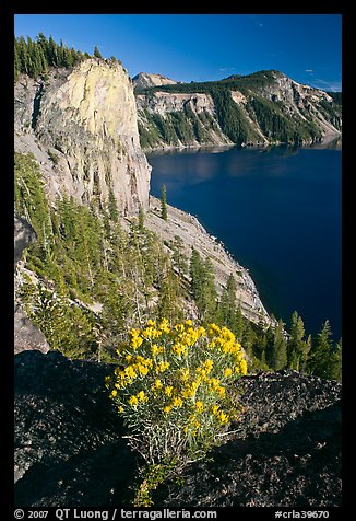Sage flower and cliff. Crater Lake National Park (color)