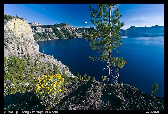 Flowers, cliff, and lake. Crater Lake National Park (color)