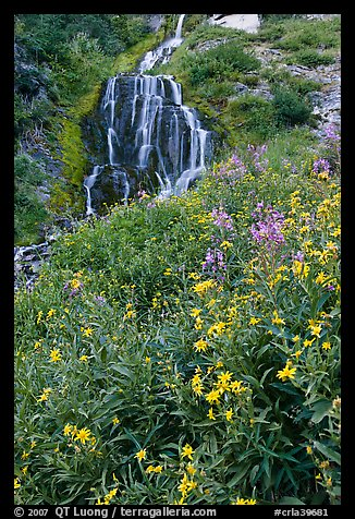 Wildflowers and Vidae Falls. Crater Lake National Park (color)