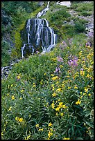 Wildflowers and Vidae Falls. Crater Lake National Park, Oregon, USA.