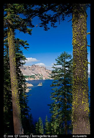 Lake seen between pine trees. Crater Lake National Park (color)