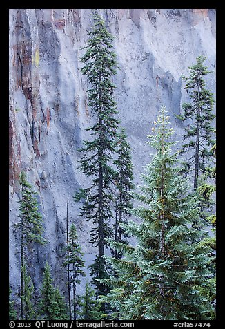 Trees and fossilized ash wall, Munson Creek. Crater Lake National Park (color)
